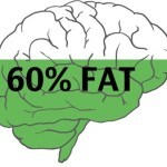 "The Importance of a ""fatty brain"""